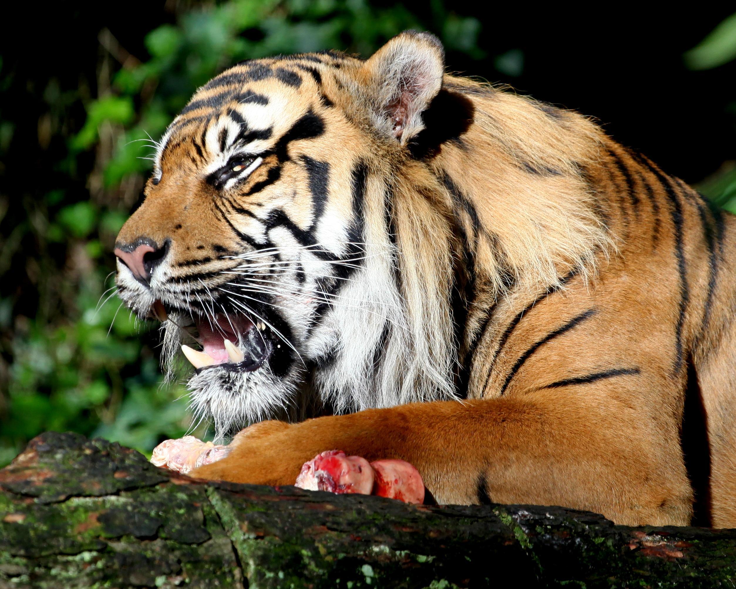 マネーの虎を100倍楽しむ方法